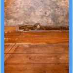 Wall-Mold-Removal-Livermore