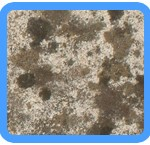 Water-Mold-Removal-Livermore