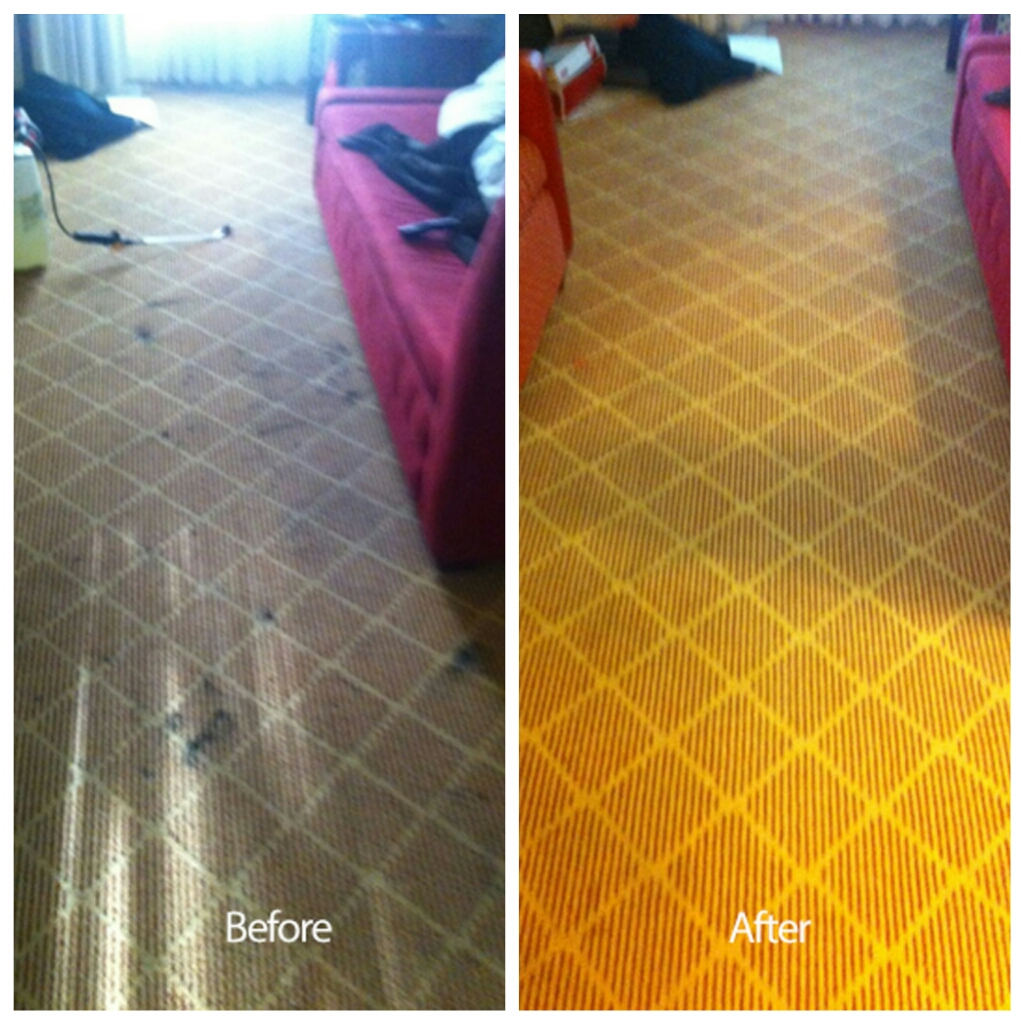 Carpet Cleaning Antioch Ca Images Alameda